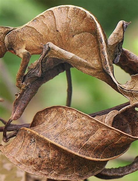 Can you find the 9 camouflaged bugs? | Interesting animals