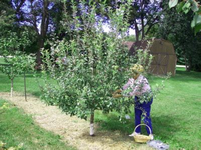 growing apples, pears, and Asian pears backyard gardening
