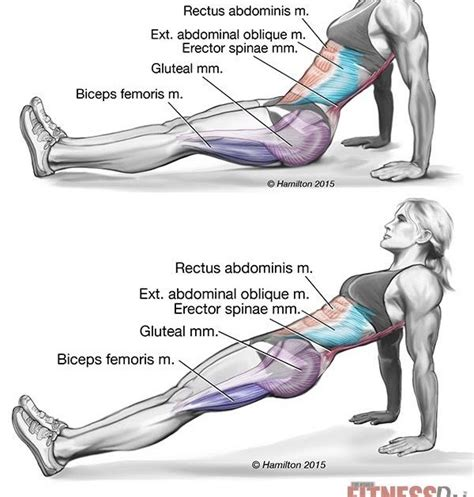 Ab Roller Before And After