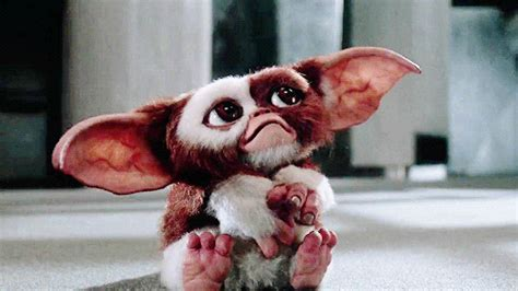 Gizmo GIFs - Find & Share on GIPHY