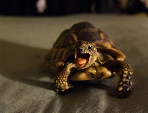 33 Pictures That Prove Reptiles Can Be Unbearably Cute