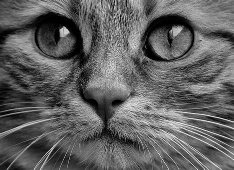 Black, Cat - Free pictures on Pixabay