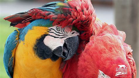 Best Friends Macaws Wallpapers   HD Wallpapers   ID #12079