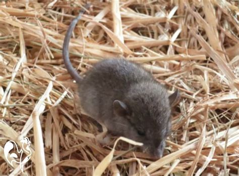 Rat droppings: how they help identify a problem in your