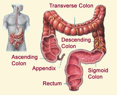 Maintain a Healthy Colon ~ Remove Parasites, Old Poop, and