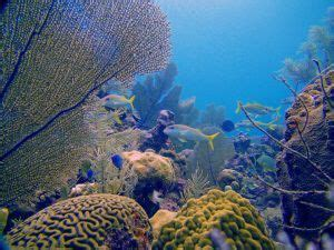 Cayman Eco - Beyond Cayman A Fifth of Food-Output Growth
