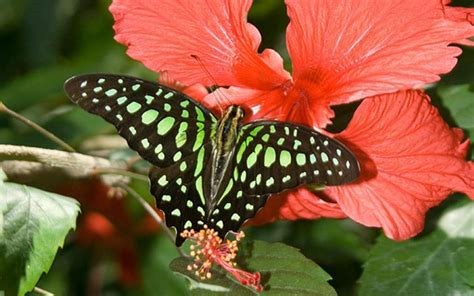 Discover wonderful wildlife in the Cayman Islands